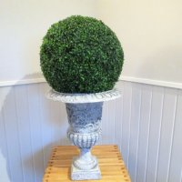 urn-boxwood-ball-large